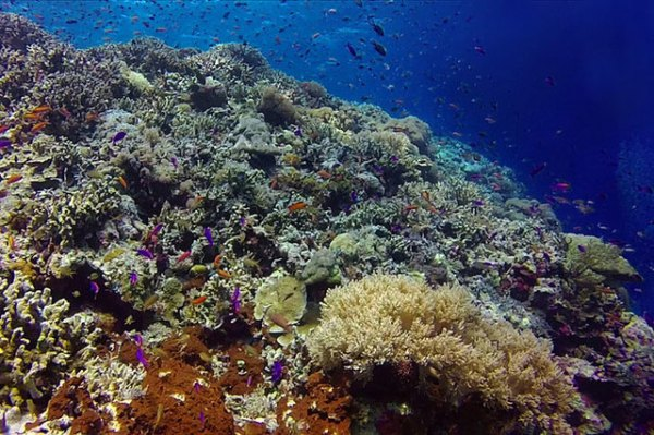 Tourism linked to 70% coral loss in Boracay