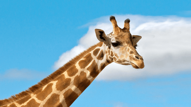 980x Crazy Facts You Didn't Know About Animals Random