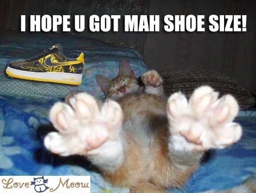Add Lolcat Captions Love Meow