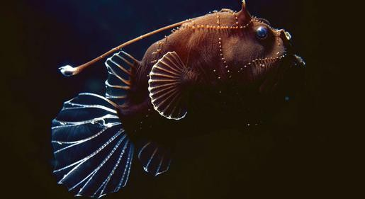 Bizarre Deep-Sea Reef Creatures Discovered - Seeker
