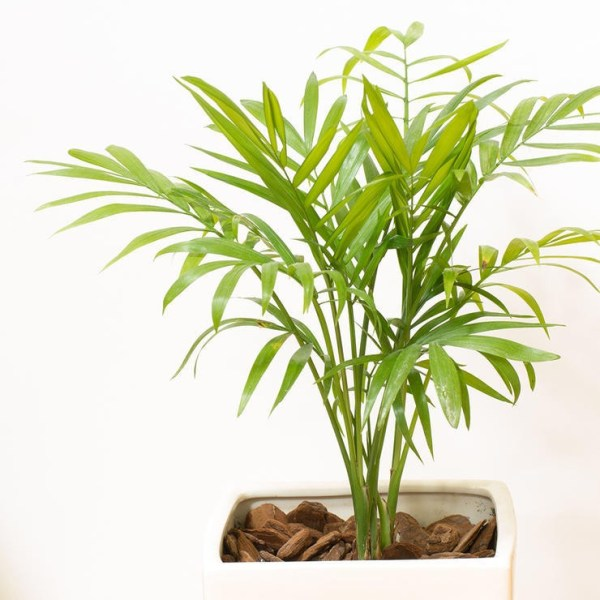 20 Plants That Improve Air Quality in Your Home - EcoWatch