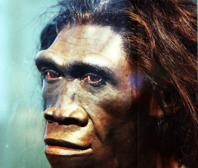 A Snapshot Of Our Mysterious Ancestor Homo Erectus Realclearscience