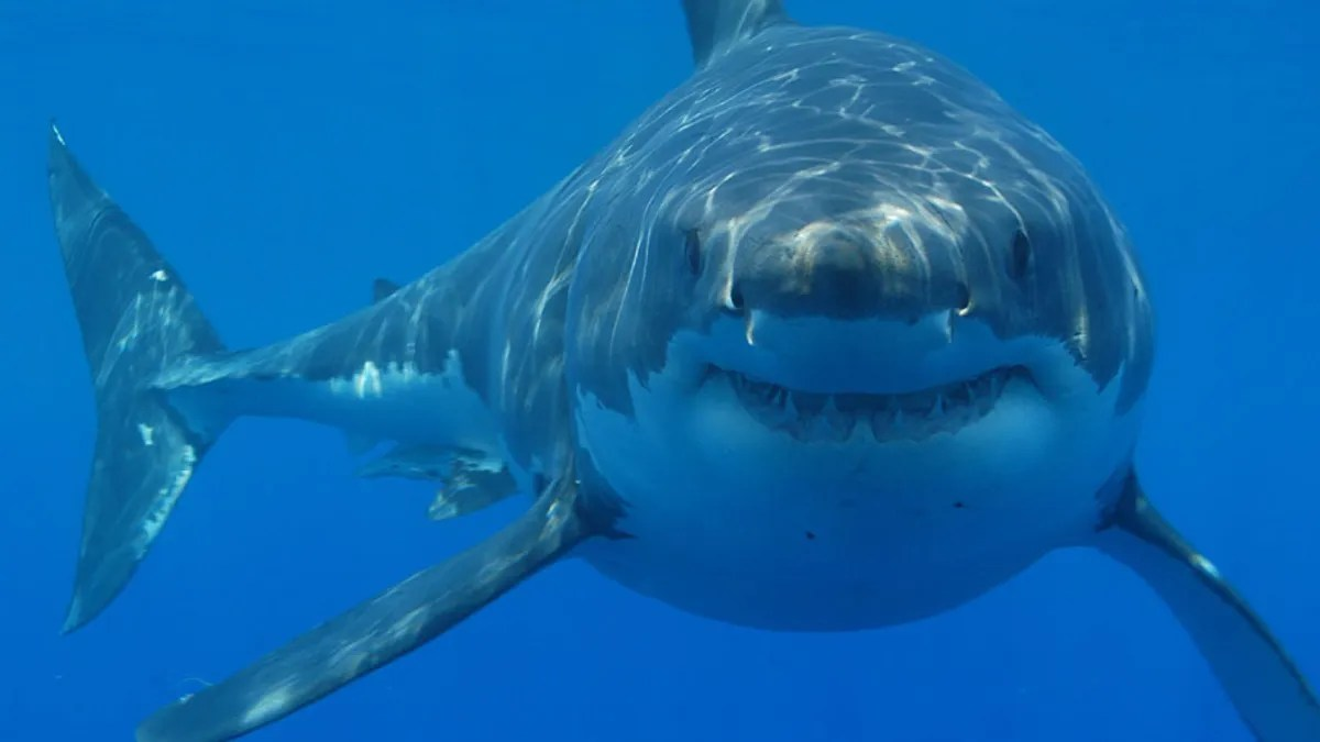 Maine Woman Is Killed in Possible Shark Attack