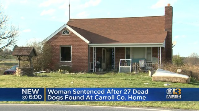 Maryland woman sentenced after police found 27 dead dogs in her sewage, corpse-infested 'chamber of horrors'