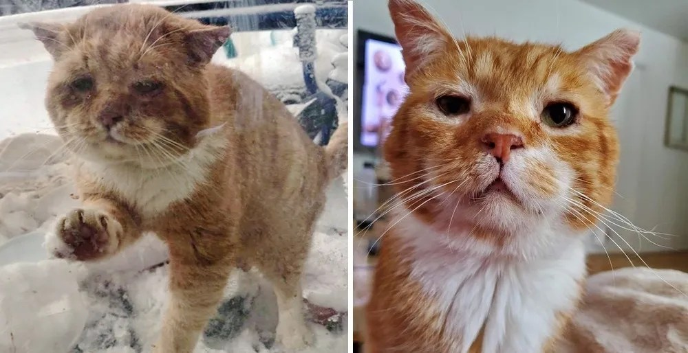 Un gato apareció en la puerta de una familia y les pidió que lo dejaran entrar después de pasar años en las calles