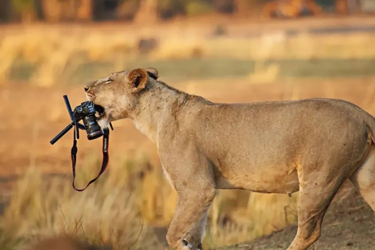 29 of the Most Incredible Photos of Animals Interrupting Wildlife  Photographers | 22 Words