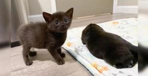Gatito descubre un «gato» de aspecto extraño en la guardería y se convierten en amigos inesperados