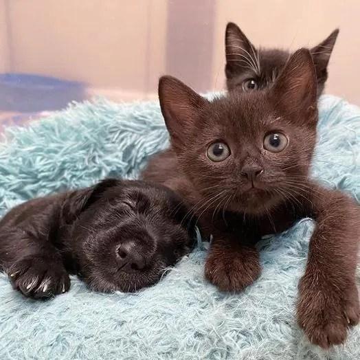 cachorro sonriente, amigos poco probables, lindos gatitos