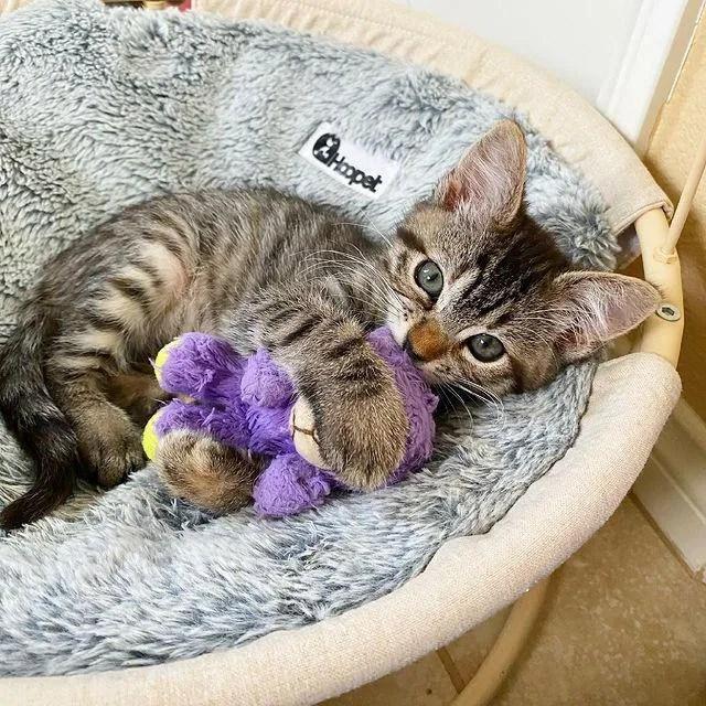 kitten cuddle animal