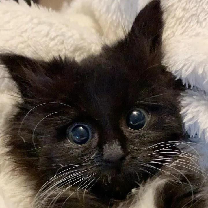 gatito con ojos grandes