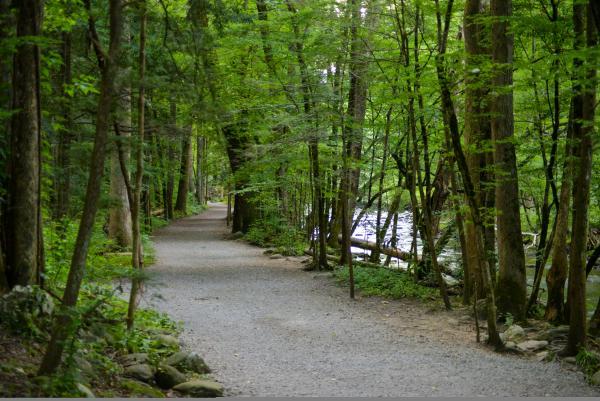 Easy hikes near gatlinburg · 1. Gatlinburg Trail Spotlight Smoky Mountains Hiking Trails