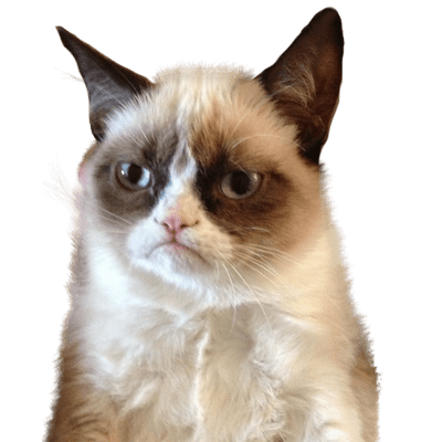 Grumpy Cat Upset Transparent PNG StickPNG