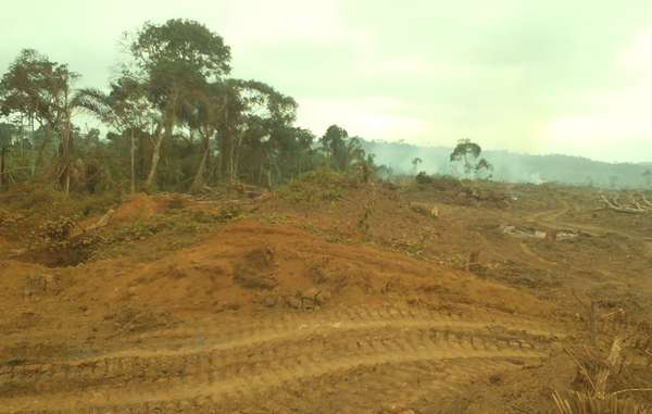 Rougier has been clearing rainforest in eastern Cameroon for the construction of a dam.