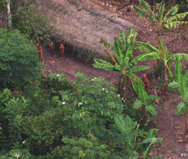 Javari__landscape Javari__landscape Javari__landscape Uncontacted Footage Thumb__landscape
