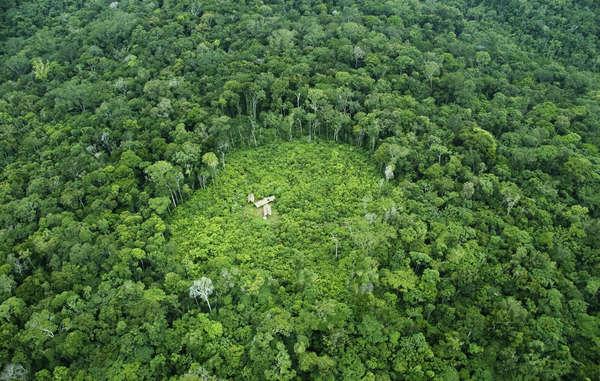 Los zo'é viven en las profundidades de la selva amazónica y construyen casas en medio de sus huertos, donde cultivan verduras y frutas como la yuca y la banana.