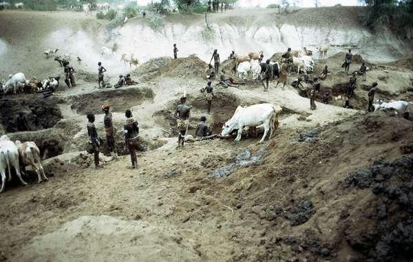 A la saison sèche, quand le niveau de l'eau baisse, les Nyangatom, les Mursi et les autres tribus de la région, creusent de grands trous dans le lit de la rivière pour abreuver leur bétail et s'approvisionner en eau potable.
