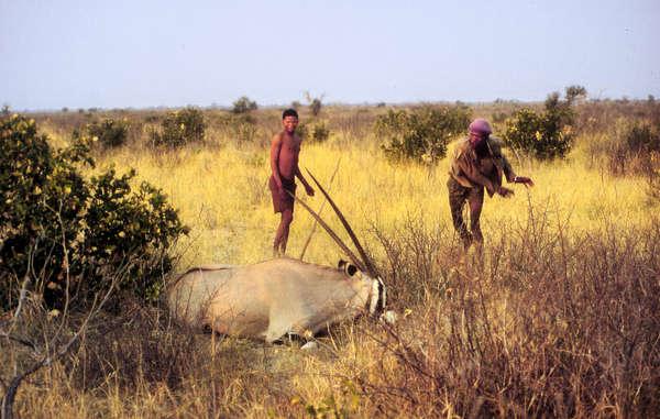 No hay evidencia de que las prácticas de caza de los bosquimanos sean poco sustentables.