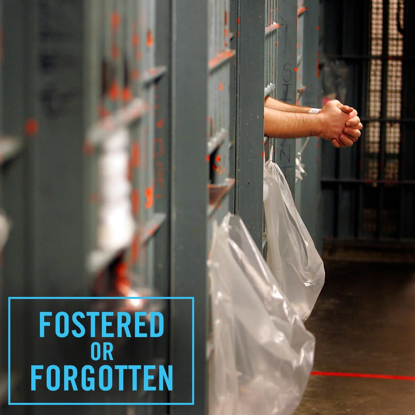 Image result for fostered or forgotten