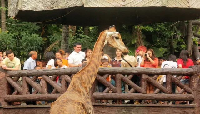 Image result for 1. Dusit Zoo