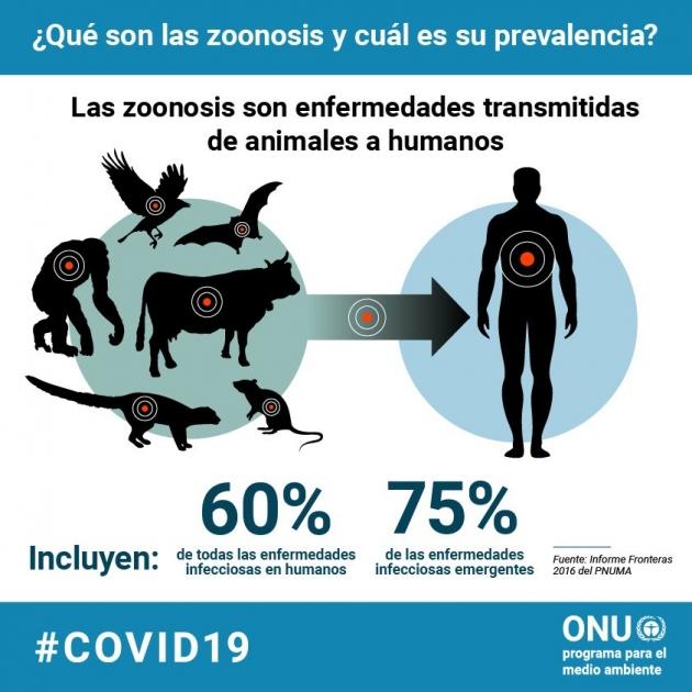 coronavirus enfermedades zoonoticas animales