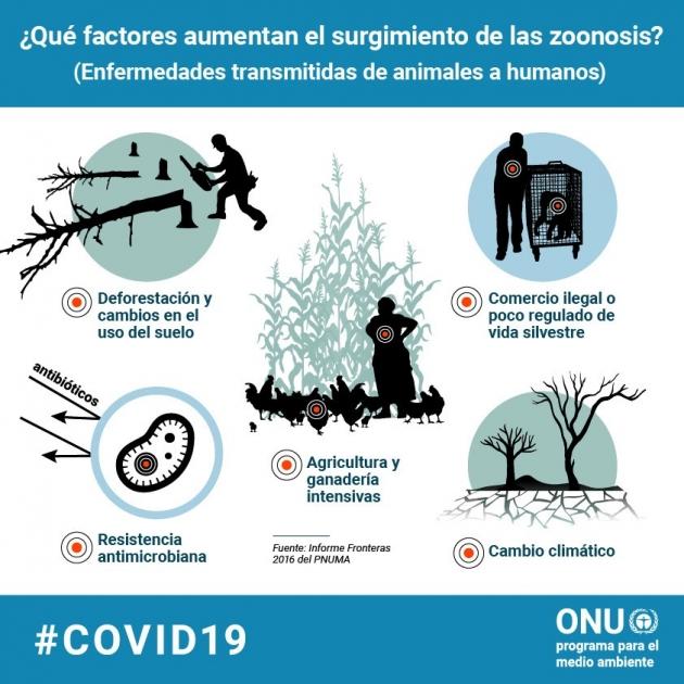 enfermedades zoonoticas medio ambiente coronavirus