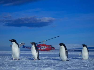 A group of Adelie penguins relax in front of a PHI