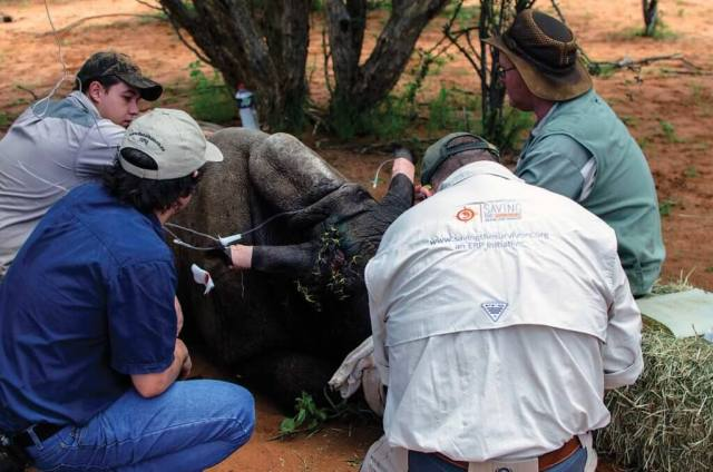 South Africa saw a decrease in rhino poaching in 2015 for the first time in seven years, but the casualties were still staggering. Rhino 911 Photo