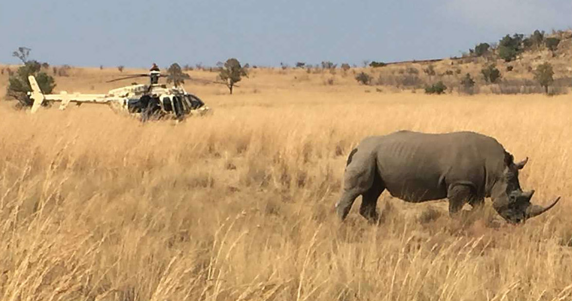 With the help of helicopter operators, Africa's rhino population may rebound from the poaching crisis. Rhino 911 Photo