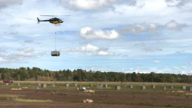 During harvest, helicopters serve as the heavy lifters, carrying 800 pounds of cranberries in a fly-off tote to a processing plant where the berries are cleaned and delivered to grocery stores. Bell Helicopter Photo