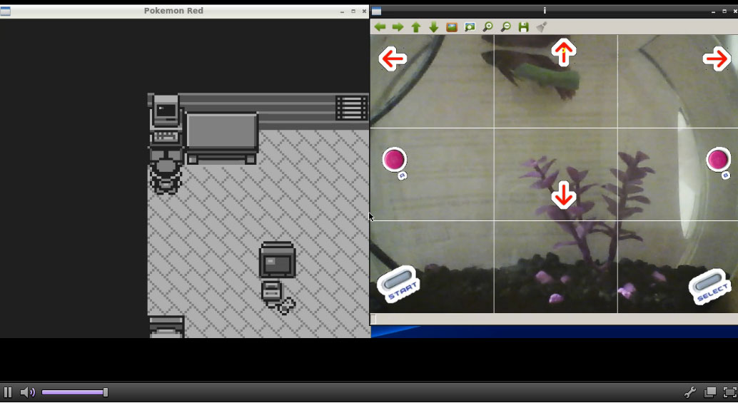 FishPlaysPokemon Is A Real Fish Playing Pokemon On Twitch