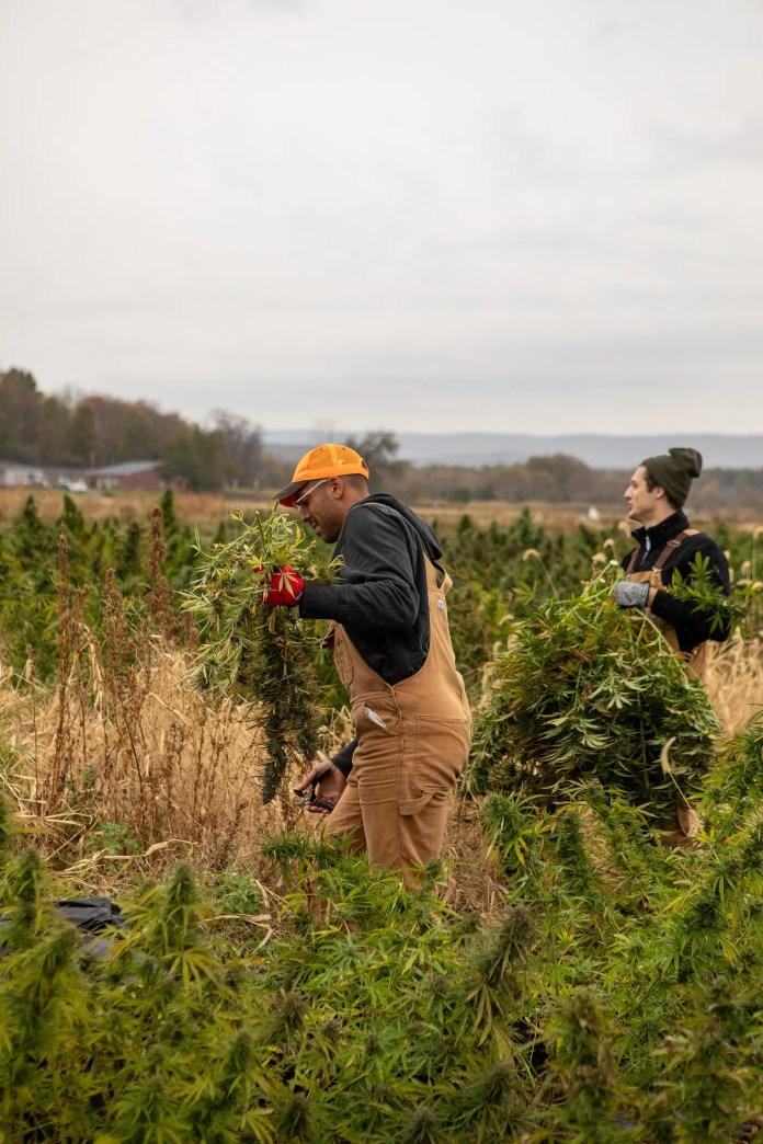 A BlackOwned Hemp Farm Flourishes in Hudson Valley