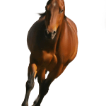 Download Png Horse Hd Png Gif Base