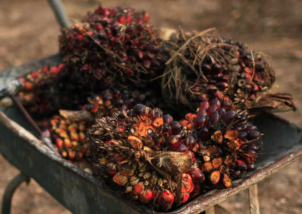 Palm oil fruits are seen placed on a wheelbarrow at a palm oil farm in Klang, outside Kuala Lumpur, February 19, 2014. Commodity giant Wilmar International is using its buying clout to push suppliers to be greener, or else, setting up a battle with growers and governments that have profited from their environmentally damaging practices. Given Singapore-listed Wilmar's muscle - its refineries process nearly half the world's palm oil - it could also drive up prices of the oil, used in cooking oil to cosmetics and biofuels, especially in price-sensitive India and China. REUTERS/Samsul Said (MALAYSIA - Tags: BUSINESS COMMODITIES) - RTX195D7