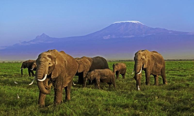 A Chorus of Hope for Elephants