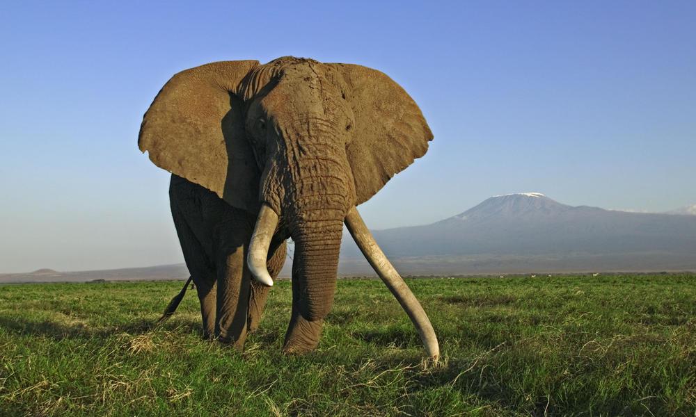 https://i1.wp.com/assets.worldwildlife.org/photos/4690/images/story_full_width/African-Elephant_112368-SWC.jpg