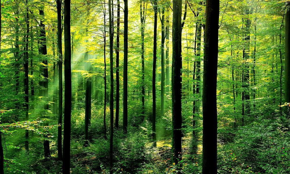 Image result for forests