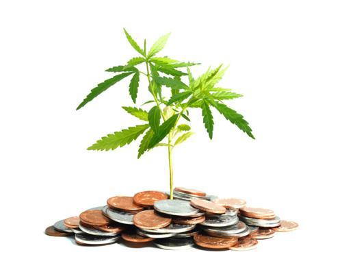 Marijuana plant and money
