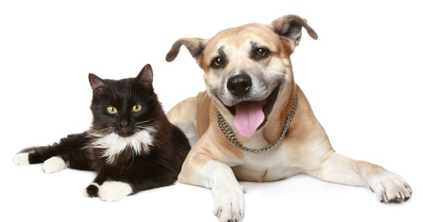 """""""Citizen Canine"""" -- A Brief History Of Cats And Dogs - The ..."""