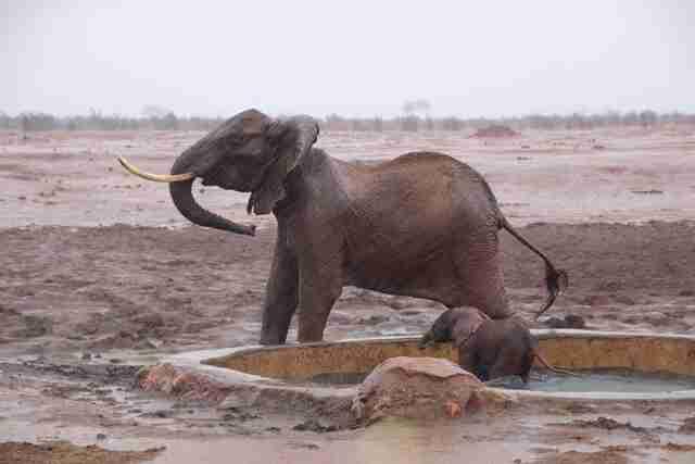 Elephant mom and baby in heavy rain
