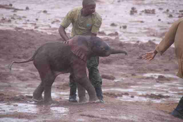 Guy saving baby elephant