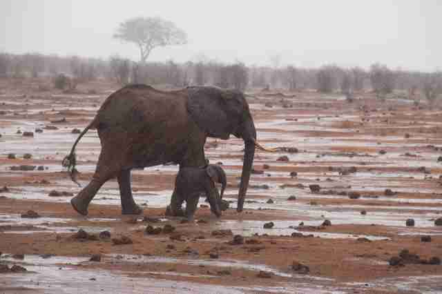 Mother elephant and baby reunited