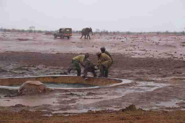 Men saving baby elephant from mud