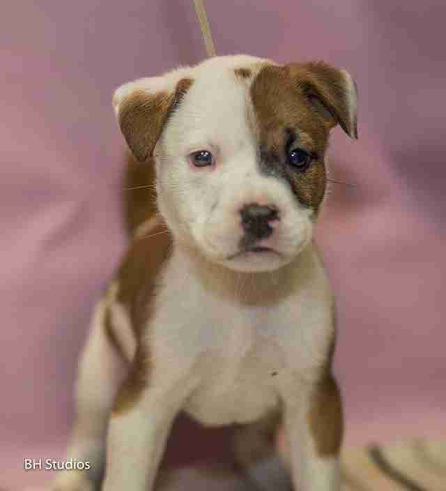 Photo of puppy at shelter