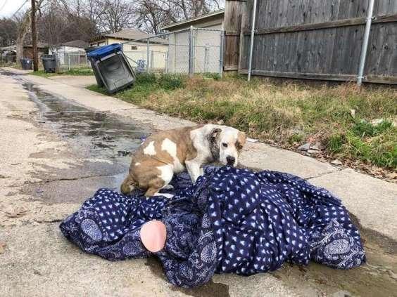 Abandoned dog lying on old blanket