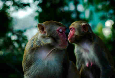 Close-Up Of Monkeys