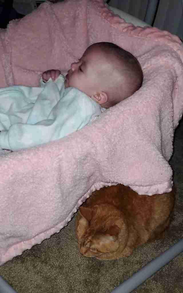 sieste de chat avec bébé