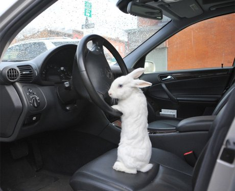 Image result for bunny on in a car