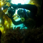 Bruce taking photos underwater. He is seen wearing scuba gear and holding a camera.