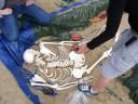 La mise en place de la sépulture