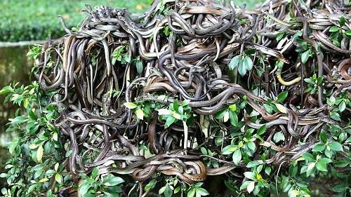 The deadliest 'snake island' of Brazil - Associates Times a Caribbean News  website